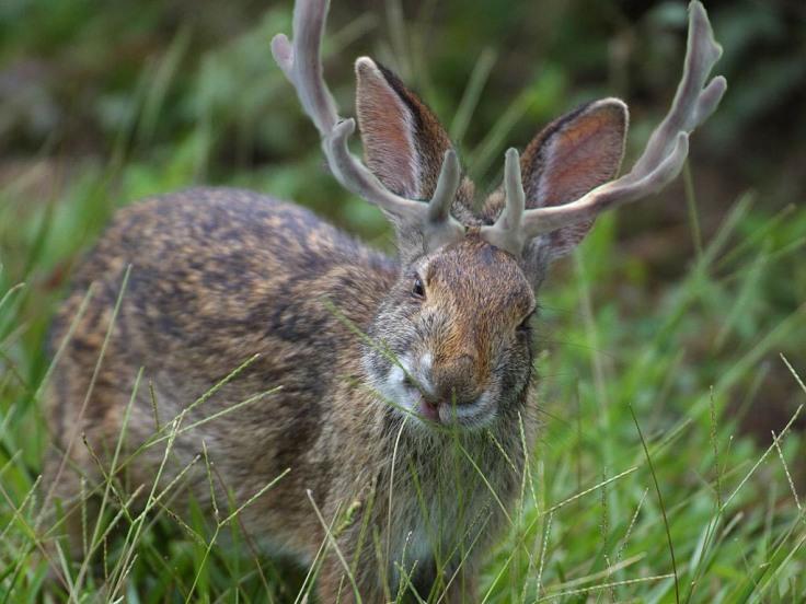 rabbit111c